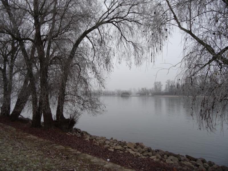 Rüdesheim – Eltville, Leinpfad am Rhein, 1 Januar 2017
