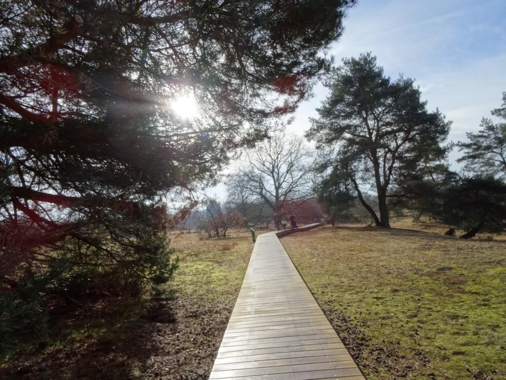 Grüngürtel: Höchst – Tiroler Weiher, 5 Februar 2017