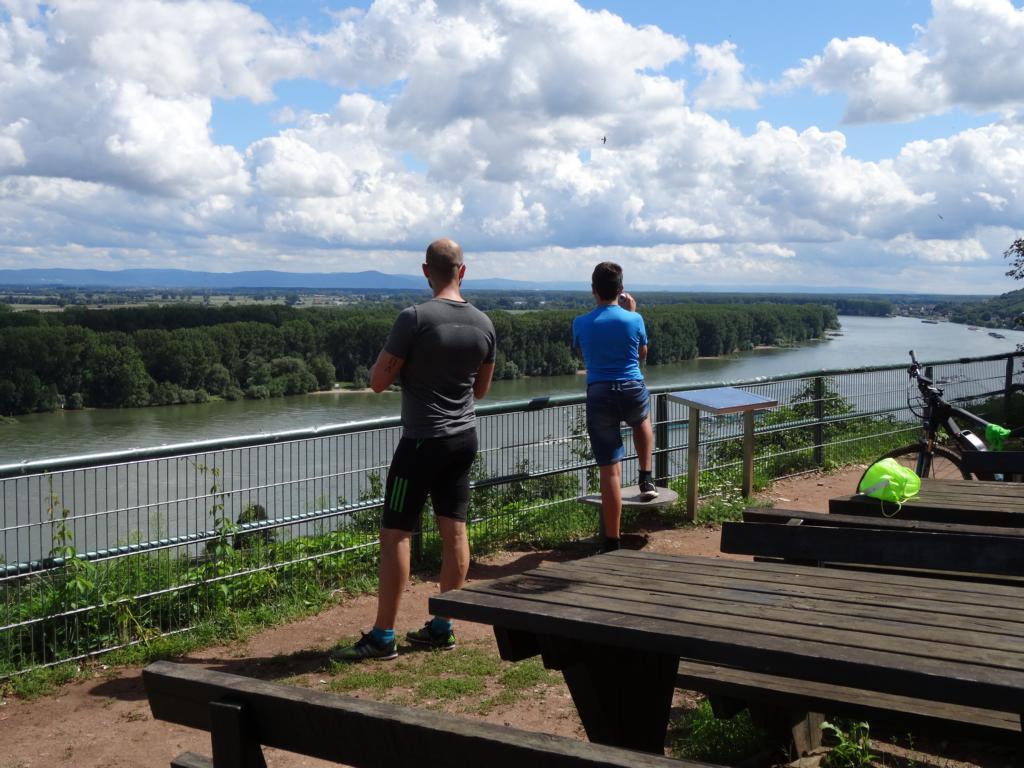 RheinTerassenWeg: Alsheim-Nackenheim, 13 August 2017