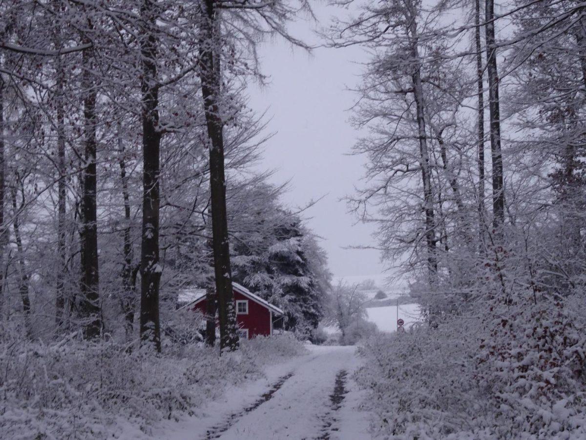 Schneewanderung: Niederselters – Kloster Gnadenthal, 3 Dezember 2017