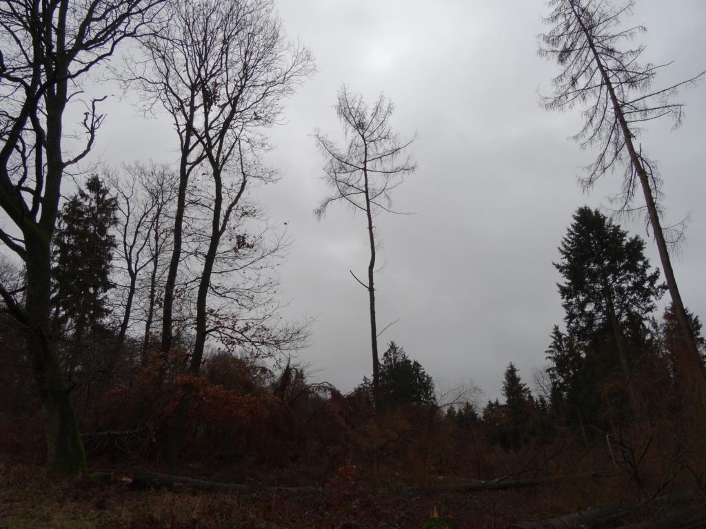 Niederselters – Bad Camberg-Erbach, 13 Januar 2019